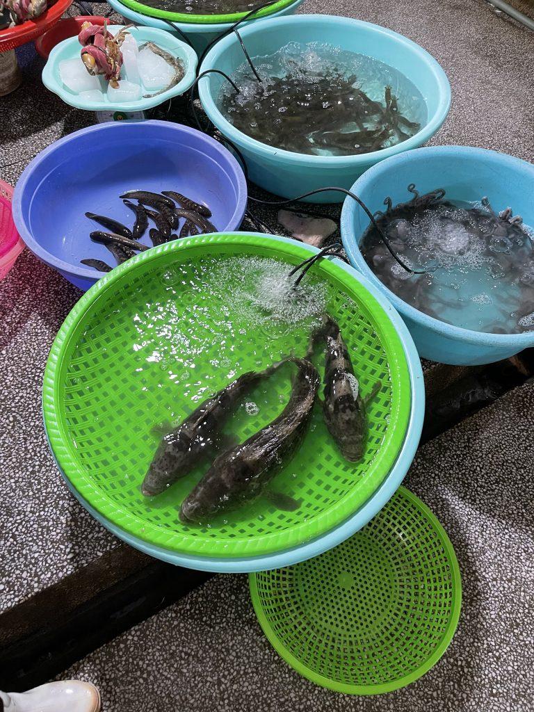 Cá tươi sống được cấp ôxy