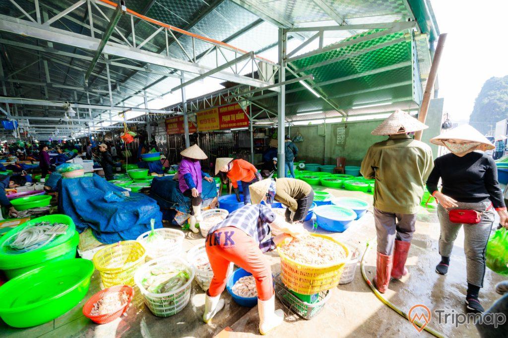 Chợ Hạ Long, Chợ Hòn Gai, người đàn bà đang cân cá, nhiều chậu cá màu xanh, trời nắng, nhiều người đội nón, nền đất màu xám, ảnh chụp ban ngày