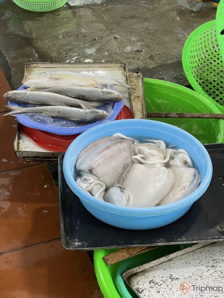 Con mực trong chậu tại chợ Hạ Long