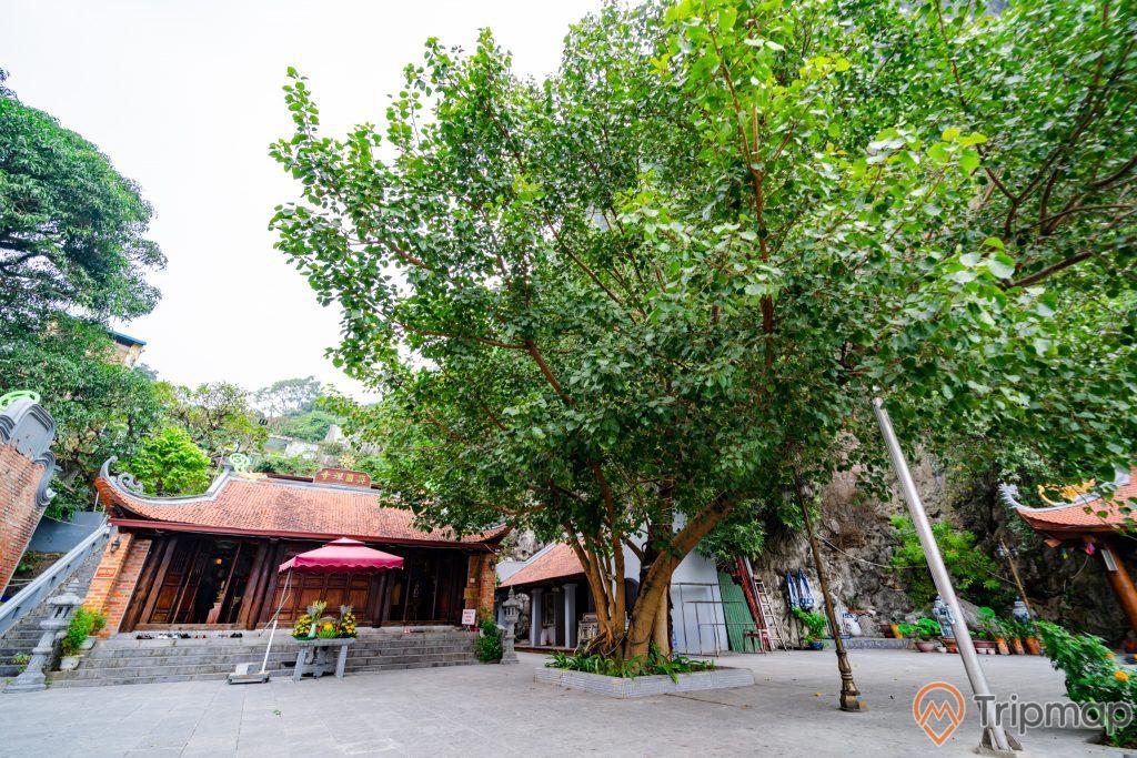Đền thờ Đức Ông Trần Quốc Nghiễn, nền đường màu xám, nhiều cây xanh, bậc thang màu xám, mái ngói màu đỏ, ảnh chụp ban ngày