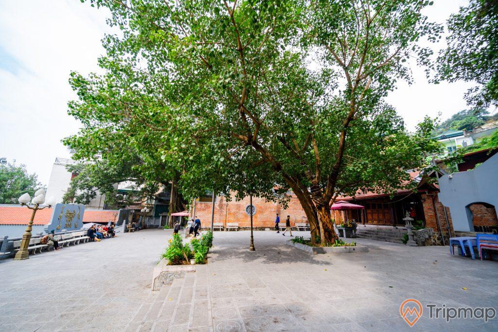 Đền thờ Đức Ông Trần Quốc Nghiễn, nền gạch màu xám, cây xanh, bức tường bằng gạch màu đỏ, ảnh chụp ban ngày, ảnh chụp trời nắng
