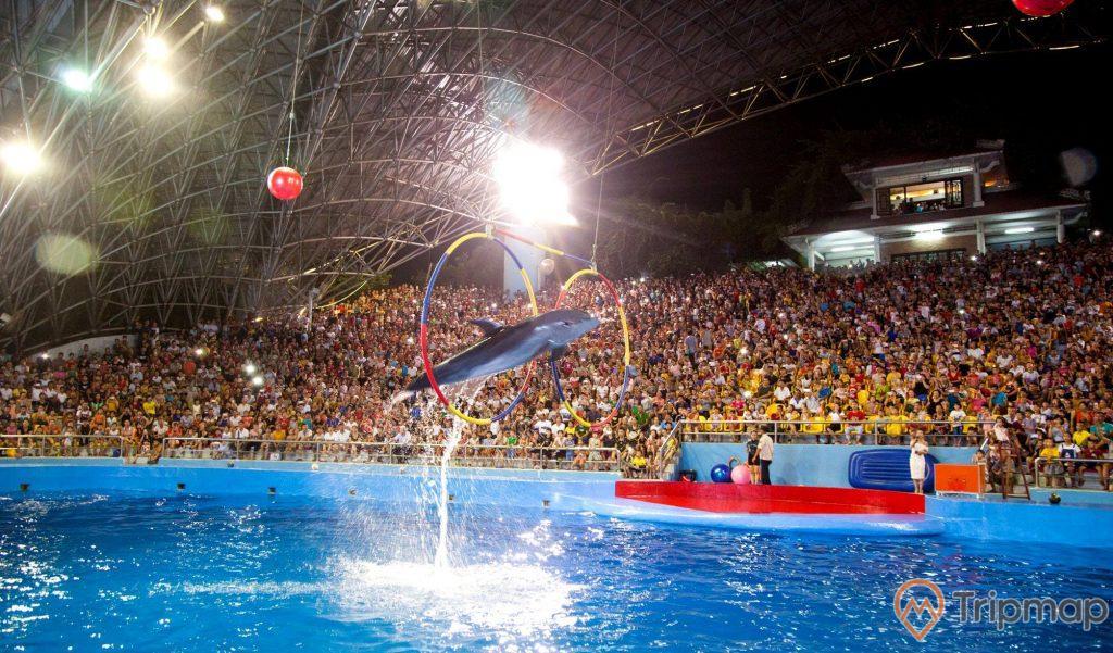 Cảnh cá heo nhảy qua 2 vòng tròn đang treo lơ lửng tại sân khấu biểu diễn cá heo Tuần Châu, mọi người đang ngồi trên sân khấu xem tiết mục cá heo diễn, ảnh chụp trong sân khấu cá heo Tuần Châu