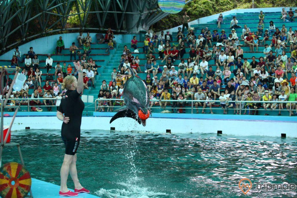 Du khách xem tiết mục xiếc tại sân khấu biểu diễn cá heo Tuần Châu, một người huấn luyện cá đang đứng và cá heo miệng ngậm quả bóng màu đỏ nhảy lên khỏi mặt nước, mọi người đang ngồi trên sân khấu xem cá heo biểu diễn, ảnh chụp trong cung biểu diễn cá heo