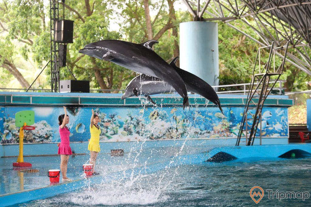 Người huấn luyện cá heo tại sân khấu biểu diễn cá heo Tuần Châu, ảnh chụp trong sân khấu biểu diễn, 2 cô gái vãy hồng và váy vàng đang đứng giơ tay huấn luyện 2 con cá heo nhảy lên khỏi mặt hồ nước