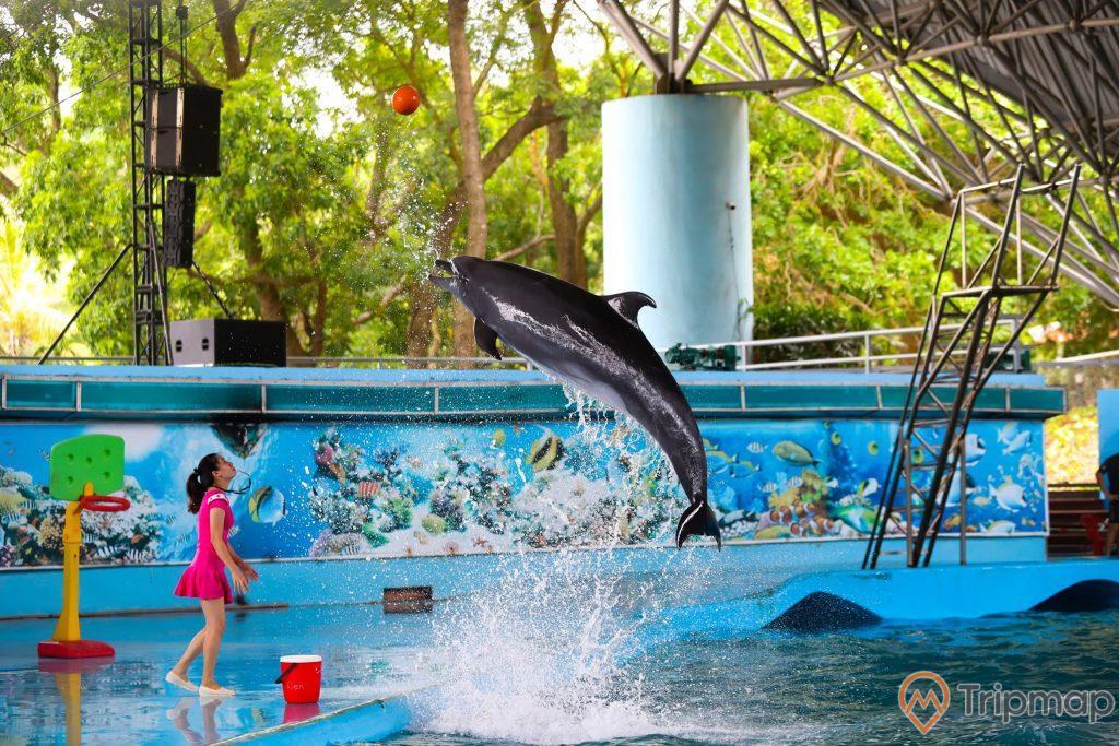 Buổi huấn luyện cá heo tại sân khấu biểu diễn cá heo Tuần Châu, cô gái váy hồng đang huấn luyện cá heo nhảy lên bắt quả bóng màu đỏ, ảnh chụp tại sân khấu biểu diễn