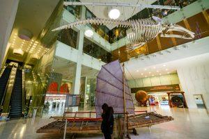 Bảo tàng Quảng Ninh, biển cả và tự nhiên, xương cá voi, mô hình thuyền buồm, thang máy, nền nhà bằng gạch màu nâu, nhà kính, ảnh chụp ban ngày
