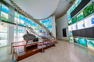Bảo tàng Quảng Ninh, mô hình cá màu xám, nền nhà bằng gạch màu nâu nhạt, nhiều màn hình nhỏ, ảnh chụp ban ngày