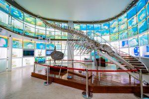 Bảo tàng Quảng Ninh, xương cá màu trắng, nhiều màn hình nhỏ, nền nhà bằng gạch màu nâu nhạt, ảnh chụp ban ngày