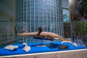 Bảo tàng Quảng Ninh, biển cả và tự nhiên, mô hình cá trưng bày trong tủ kính