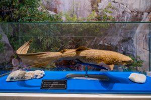 Bảo tàng Quảng Ninh, mô hình cá trong tủ kính, bảng giới thiệu màu đen, cá màu vàng