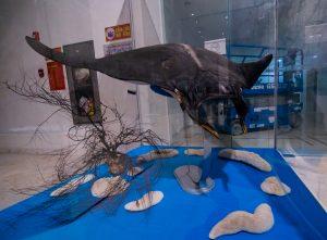 Bảo tàng Quảng Ninh, mô hình cá đặt trong tủ kính, xe điện