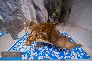 Bảo tàng Quảng Ninh, mô hình cá đuối trong tủ kính, nhiều viên đá nhỏ màu trắng, nền nhà màu xám, cá màu nâu