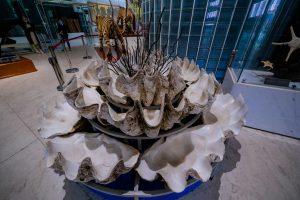 Bảo tàng Quảng Ninh, biển cả và tự nhiên, mô hình vỏ sò, nền gạch màu xám, mô hình con hổ
