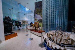 Bảo tàng Quảng Ninh, mô hình vỏ sò, mô hình con hổ, mô hình gấu màu đen, nền gạch màu nâu nhạt, nhiều tấm kính