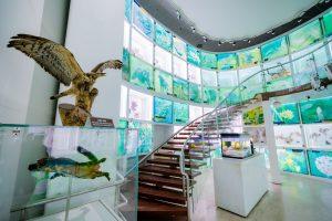 Bảo tàng Quảng Ninh, biển cả và tự nhiên, mô hình đại bàng màu nâu, cầu thang bằng gỗ màu nâu, nhiều tủ kính, nền nhà màu nâu nhạt, cột màu trắng