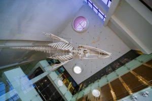 Bảo tàng Quảng Ninh, biển cả và tự nhiên, xương cá voi màu trắng, trần nhà màu trắng , ảnh chụp ban ngày
