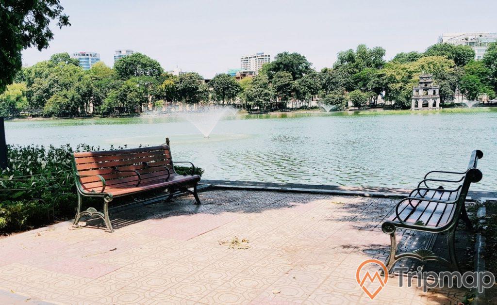 chiếc ghế hồ nước cây cối