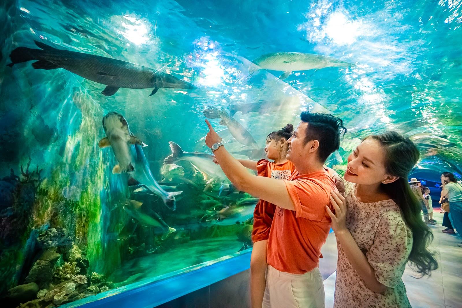 gia đình tham quan thuỷ cung tại Thiên Đường Bảo Sơn, người bố mặc áo cam đang chỉ tay và bế con gái, người mẹ ở phía sau mặc áo hoa, mọi người đang nhìn bể cá, nhiều con cá đang bơi, ảnh chụp bên trong lòng thuỷ cung,