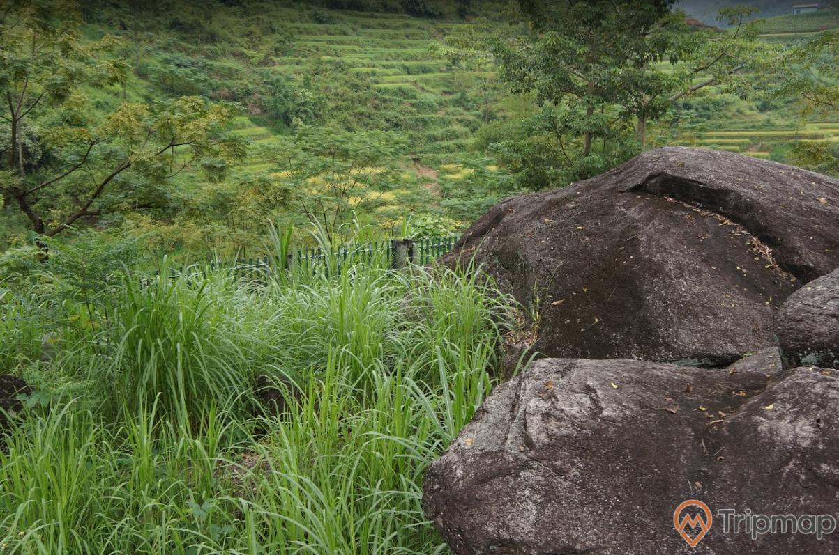 Khu tích bãi đá cổ Nấm Dẩn, cây cối xanh tươi gần khu bãi đá cổ, phiến đá cổ, ảnh chụp ngoài trời
