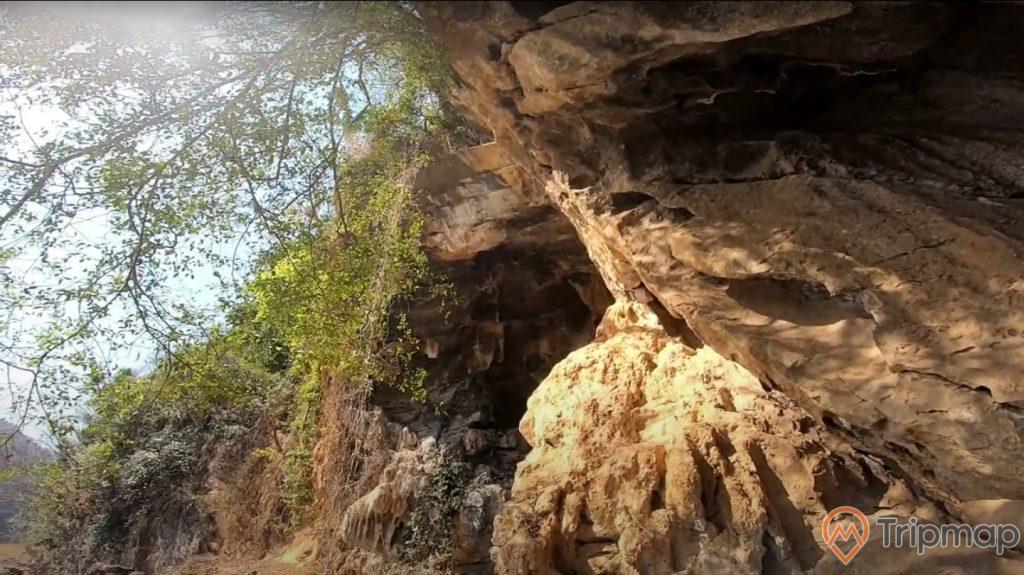 Vách đá ở của hang động Xá Nhè, cây cối mọc trên vách đá trên cửa hang động