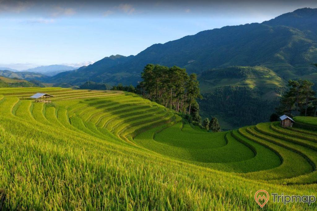 Cánh đồng lúa xanh tươi tại ruộng bậc thang Hoàng Su Phì, ruộng lúc và cây cối xanh tươi, đồi núi phía xa xa, bầu trời ít mây, ảnh chụp trên cao