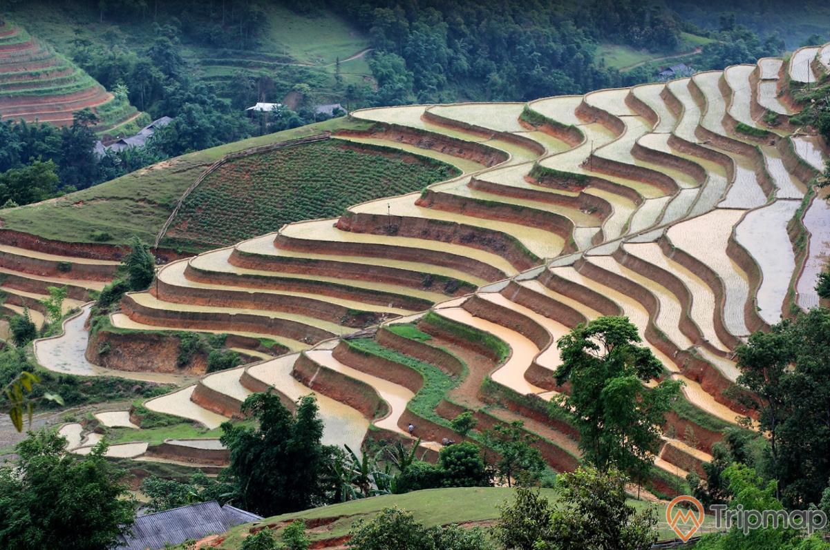Quang cảnh đầu mùa tại ruộng bậc thang Hoàng Su Phì, cây cối xanh tươi gần đồi ruộng bậc thang, anh chụp từ trên cao
