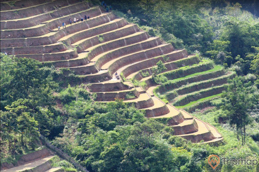 Quang cảnh cánh đồng đầu mùa tại ruộng bậc thang Hoàng Su Phì, cây cối xanh tươi gần ruộng bậc thang, ảnh chụp ngoài trời