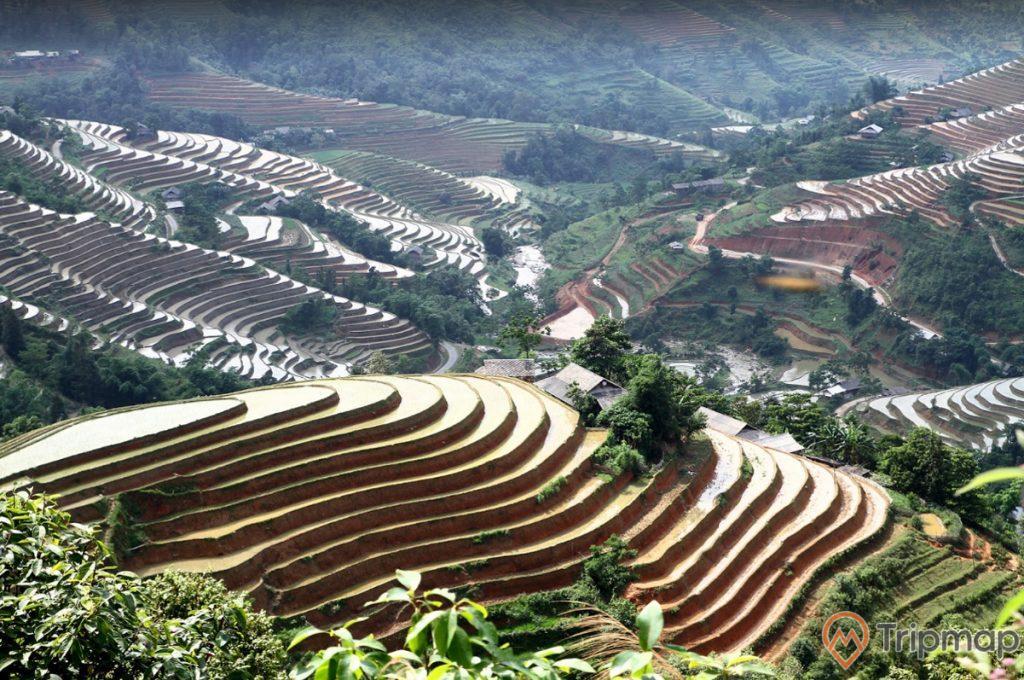 Thiên nhiên danh thắng ruộng bậc thang Hoàng Su Phì, cánh đồng ruộng bậc thang đầu mùa, cây cối xanh tươi gần ruộng bậc thang, ảnh chụp từ trên cao