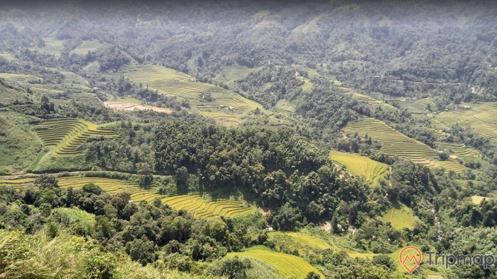 Toàn cảnh danh thắng ruộng bậc thang Hoàng Su Phì, cây cối và mảnh ruộng bậc thang xanh tươi, ảnh chụp từ trên cao