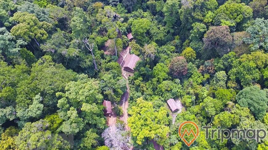 thiên nhiên khu rừng ở sở chỉ huy chiến dịch điện biên phủ, cây cối xanh tươi và nhà cửa, ảnh chụp từ trên cao