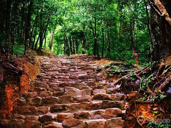 Đường Tùng có tuổi thọ 700 năm tuổi, cây cối xanh tươi
