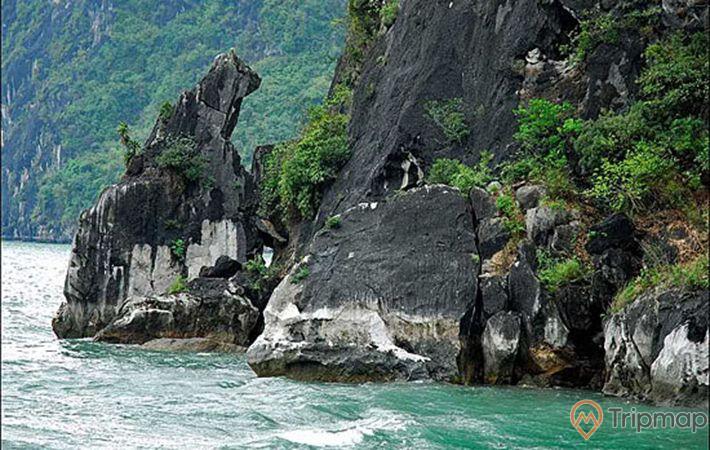 Hòn Chó Đá, mặt nước biển màu xanh, hòn đá to màu xám có cây xanh, ảnh chụp ban ngày
