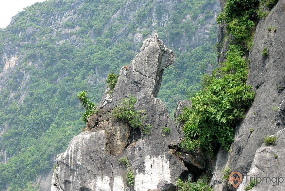 Hòn Chó Đá, nhiều cây xanh, ngọn núi đá nhiều cây xanh bên cạnh, ảnh chụp ban ngày