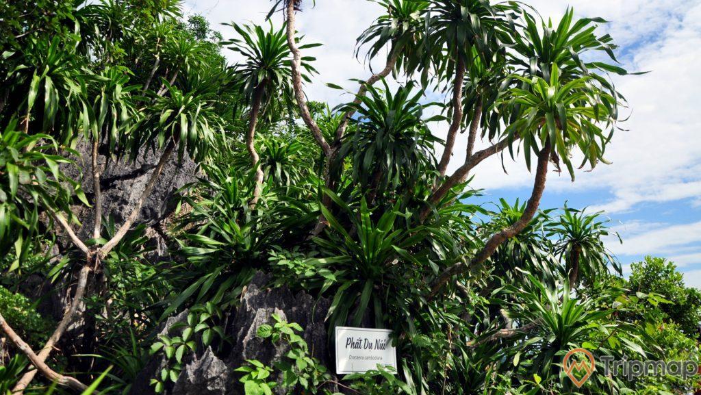 Hệ sinh thái trên đảo Soi Sim khá đa dạng