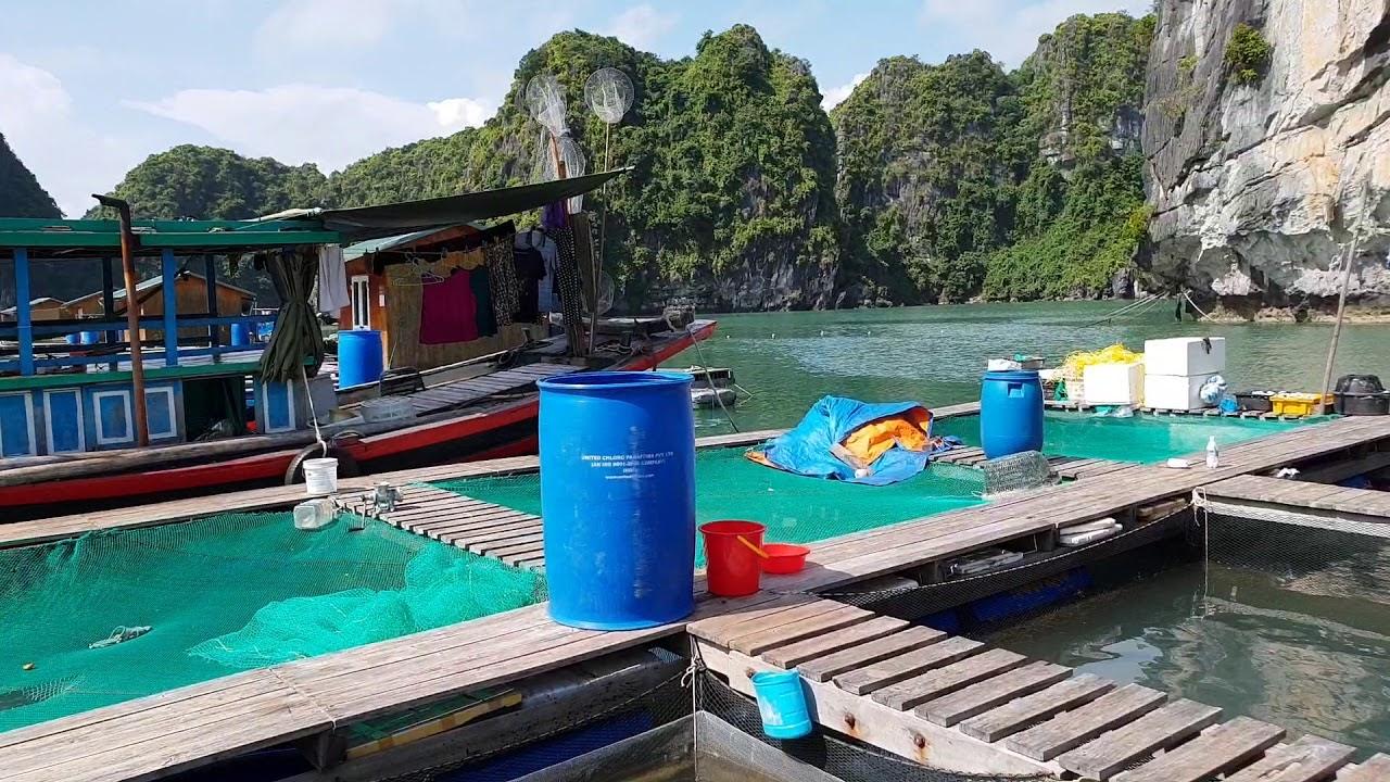 Hoạt động nuôi trồng thủy hải sản tại Vung Viêng