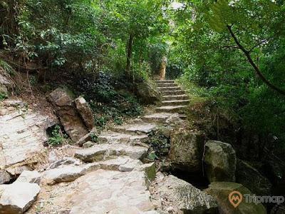 đường bậc thang uốn lượn dẫn tới thác vàng, cây cối xanh tươi