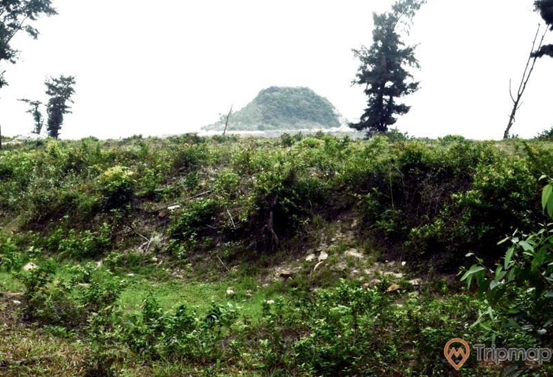 Thành cổ Ngọc Vừng, nhiều cây xanh, ảnh chụp ban ngày, ngọn núi có cây xanh phía xa