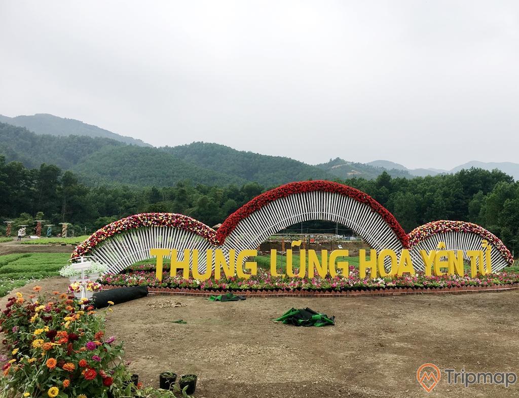 Thung lũng hoa Yên TỬ, nền đất màu nâu, nhiều hoa, ngọn núi nhiều cây xanh ở phía xa, ảnh chụp ban ngày