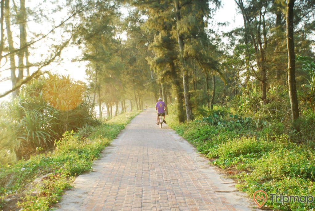 Cảnh quan con đường tình yêu ở đảo Cô Tô, một người áo tím đang đạp xe đi trên đường tình yêu, cỏ và cây cối xanh tươi dọc 2 bên đường, ánh nắng buổi chiều, ảnh chụp đứng trên con đường tình yêu