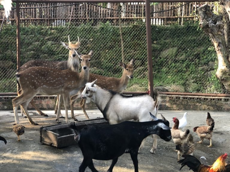 Vườn thú mini