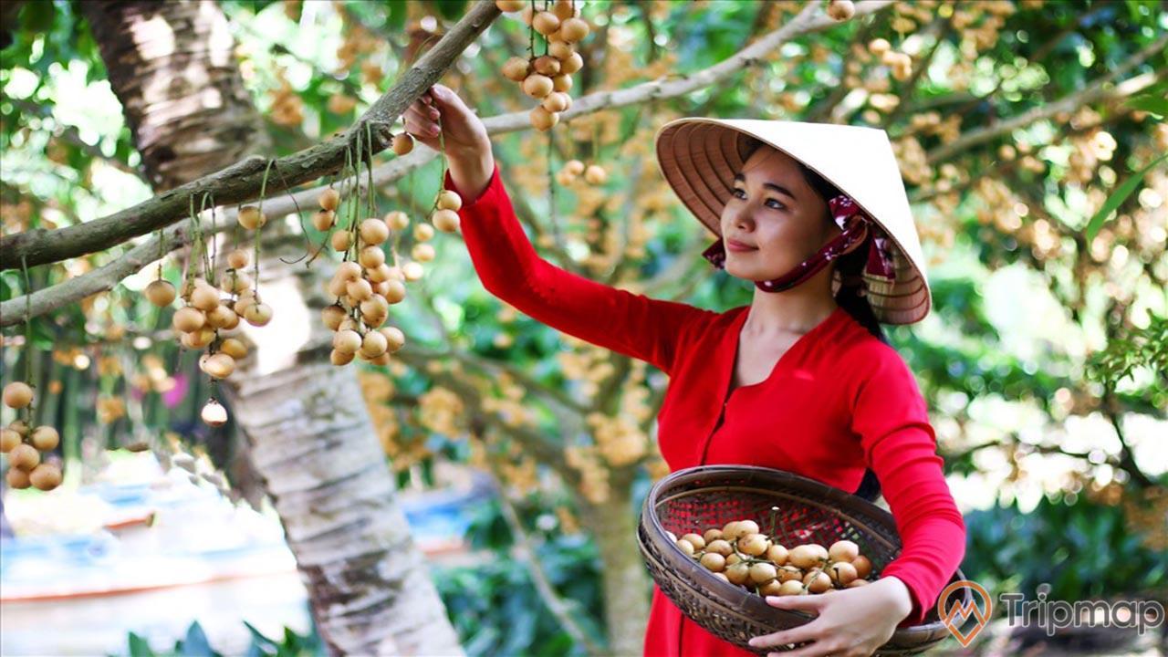 Về thăm Cù lao Tân Quy nhiều nét độc đáo