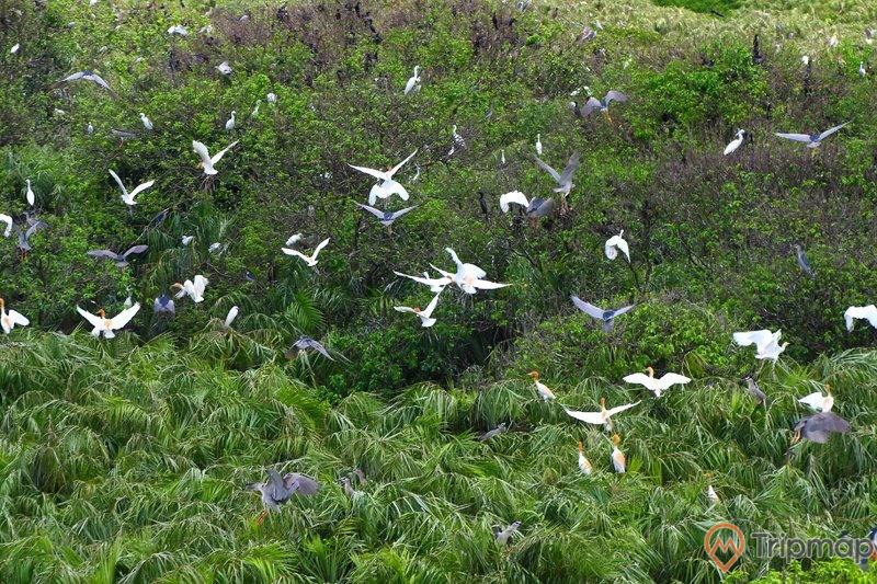 Khám phá vườn chim Cà Mau