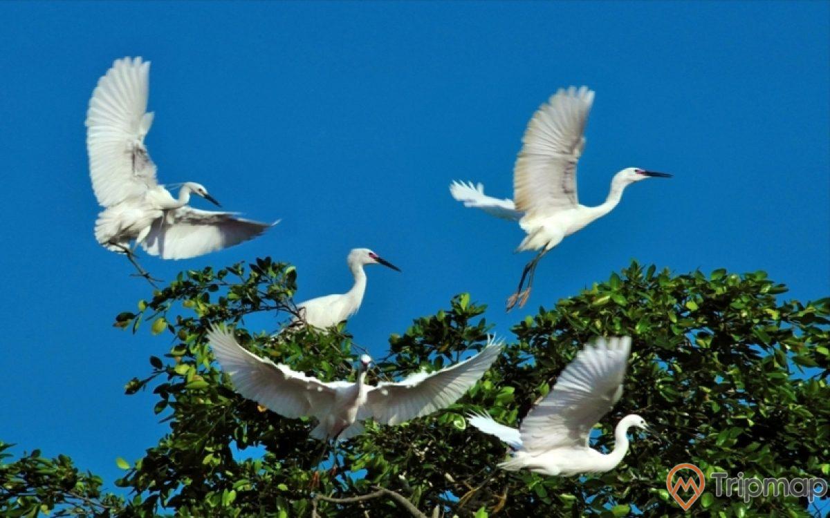 Không gian xanh tại vườn chim Cà Mau