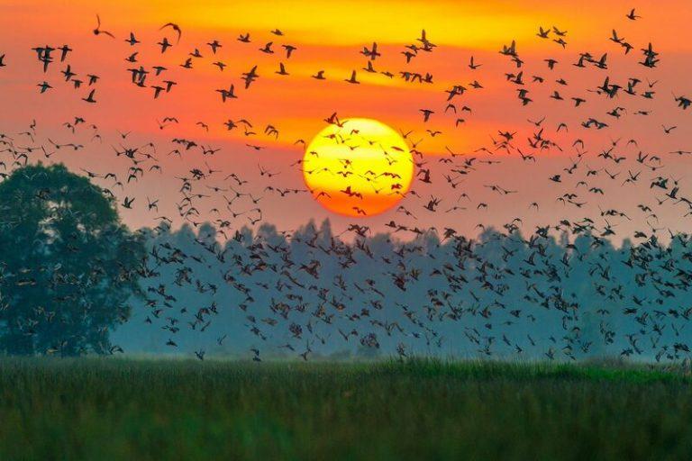 Vườn chim Ngọc Hiển