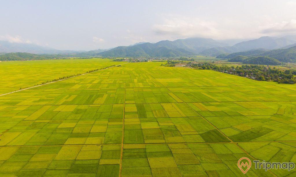 cánh đồng lúa Mường Thanh xanh mướt, ảnh chụp từ trên cao